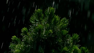 Small pine and falling drops of water at night. Super slow motion video, 500 fps