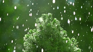 Small pine and pouring water. Super slow motion video, 500 fps