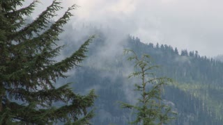 Smoke And Fog Covering Forest Mountainside