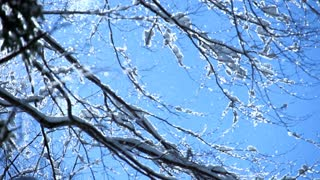 snow falling from tree in slow motion