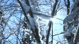 snow falling in slow motion. trees woods forest