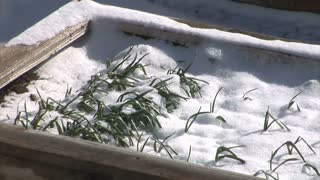 Snow Melting in Flowerbox