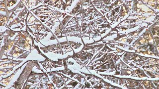 Snow Piles Up On Tree Branches