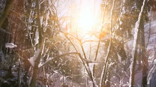 snow winter forest. trees woods nature. snow falling slow motion. magic hour