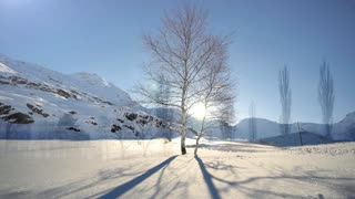snow winter landscape background. time lapse. tree silhouette