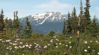 Snowcapped Mountains Behind Flowers On Hilltop