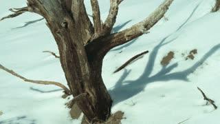 Snowy Landscape in Utah 6