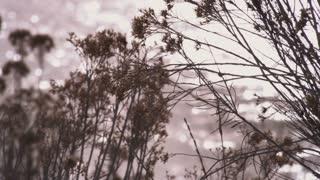 Snowy Landscape in Utah Timelapse 3