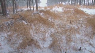 Snowy Winds Blowing Tall Grass
