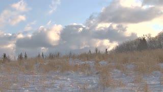 Snowy Winter Meadow
