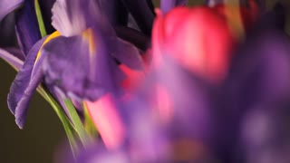 Spinning Purple and Pink Flowers Out of Focus