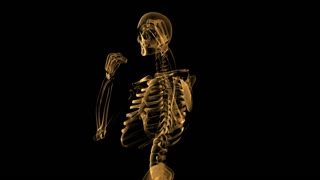 spinning skeleton body human