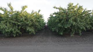 Sprayer sprays cherry orchard