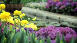 Spring Flowers Garden Pool