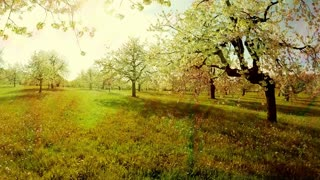 spring trees background. textures. springtime. sun flare light. nature plants