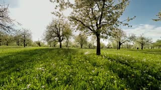spring trees. grass field. plants nature background. summertime. aerial view