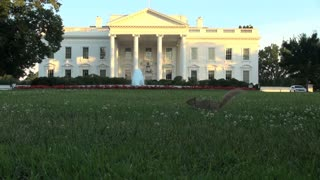 Squirrel Running Through White House Lawn