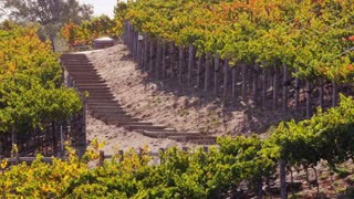 Stairs Through Vineyard Field