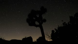 Starry Sky Timelapse Joshua Tree