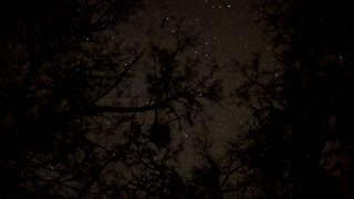 Stars Through Tree Tops