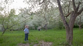 Steadicam slow motion shot of a little boy wandering among the blooming trees in the garden.