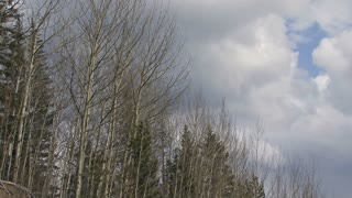 Storm Clouds Move Over Forest in Early Spring