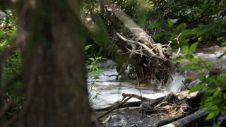 Stream Flowing on Forest Floor Through Tree