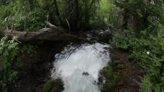 Stream Gushing Through Moss and Branches in Shade