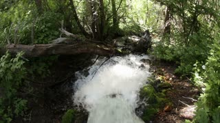 Stream Gushing Through Moss and Branches in Sun