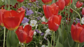Stunning Capitol Garden Flowers