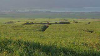 Sugar Cane Field Timelapse