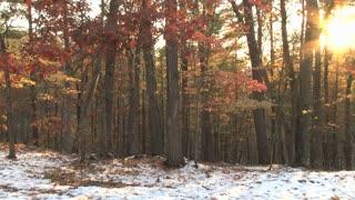 Sun Beaming Through Trees