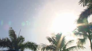 Sun Flare Palm Trees