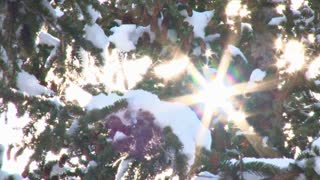 Sun Flare Through Snowy Trees