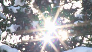 Sun Flare Through Trees During Flurry