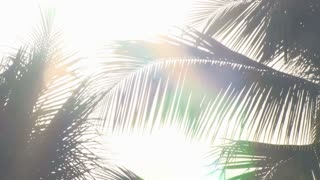 Sun Glare Through Palm Tree Leaves