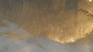 Sun Glow Grass Blowing Snow