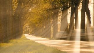 sun rays. sunbeam. trees grove branches. beaming light. street road cars