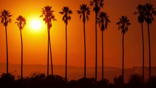 Sun Setting Behind Palm Trees