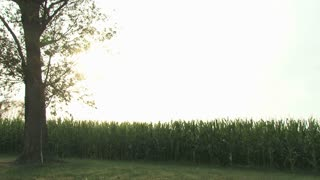 Sun Setting Over a Corn Field 2
