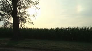 Sun Setting Over a Corn Field