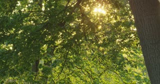 Sun Shining Through Forest Canopy