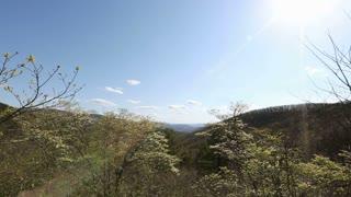 Sunbeams Across Lush Landscape