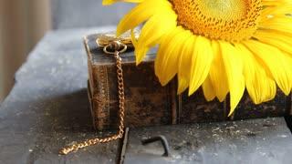 sunflower - flower background