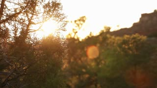 Sunlight Flaring Behind Desert Bush
