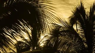 Sunlight Palms