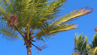 Sunny Palm Tree Branches Waving