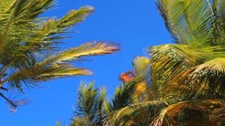 Sunny Puerto Rico Palm Trees