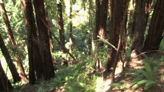 Sunny Redwood Forest Spin