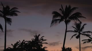 Sunset Behind Palm Trees 2